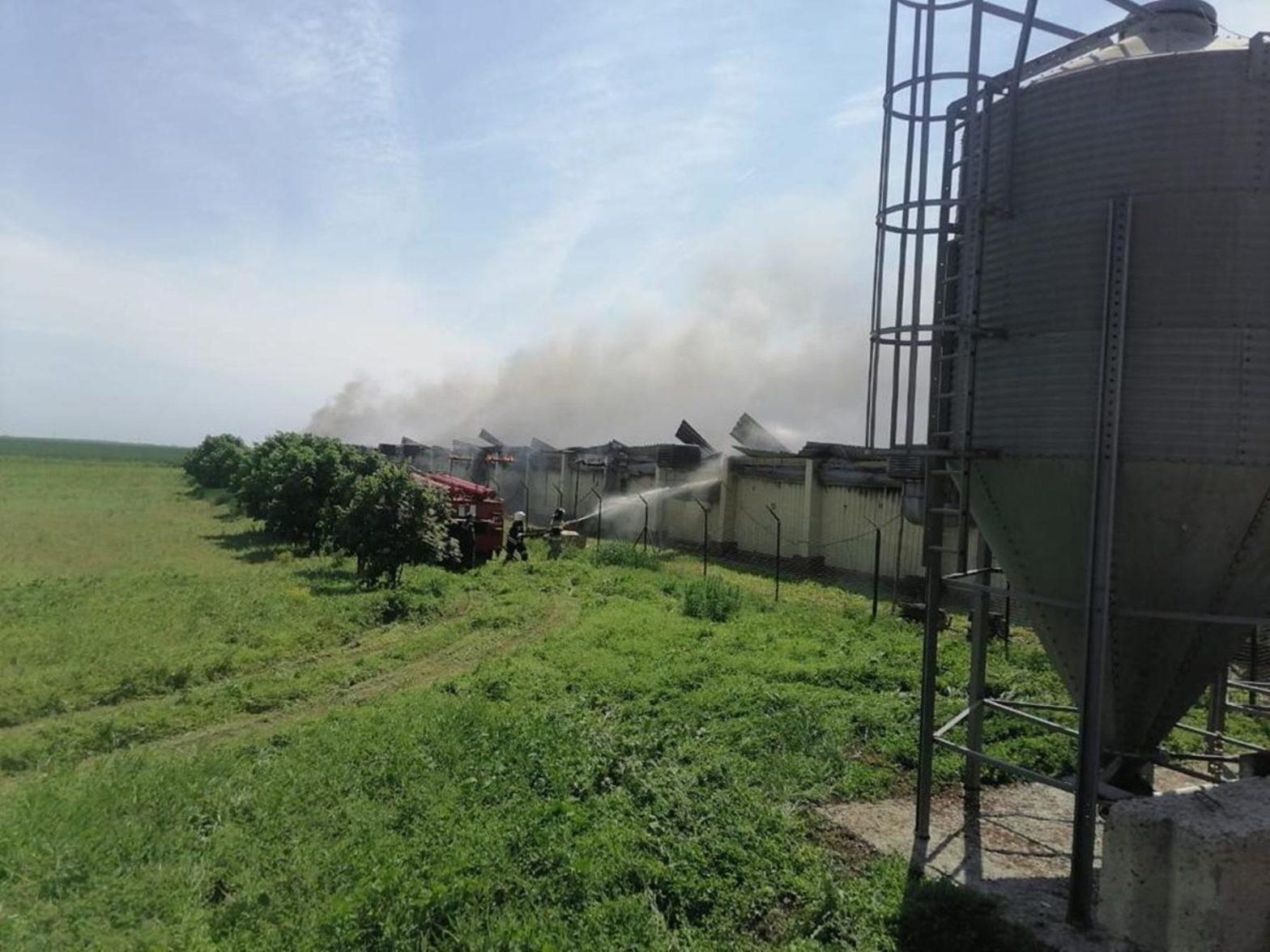 Ущерб от пожара на свиноферме в Каменском районе оценили в 50 млн рублей