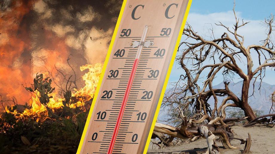 В Ростовской области ожидается аномальная жара до +41