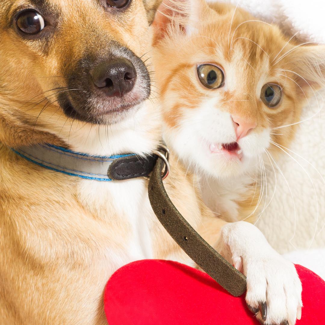 В Каменске пройдет день льготной стерилизации кошек и собак
