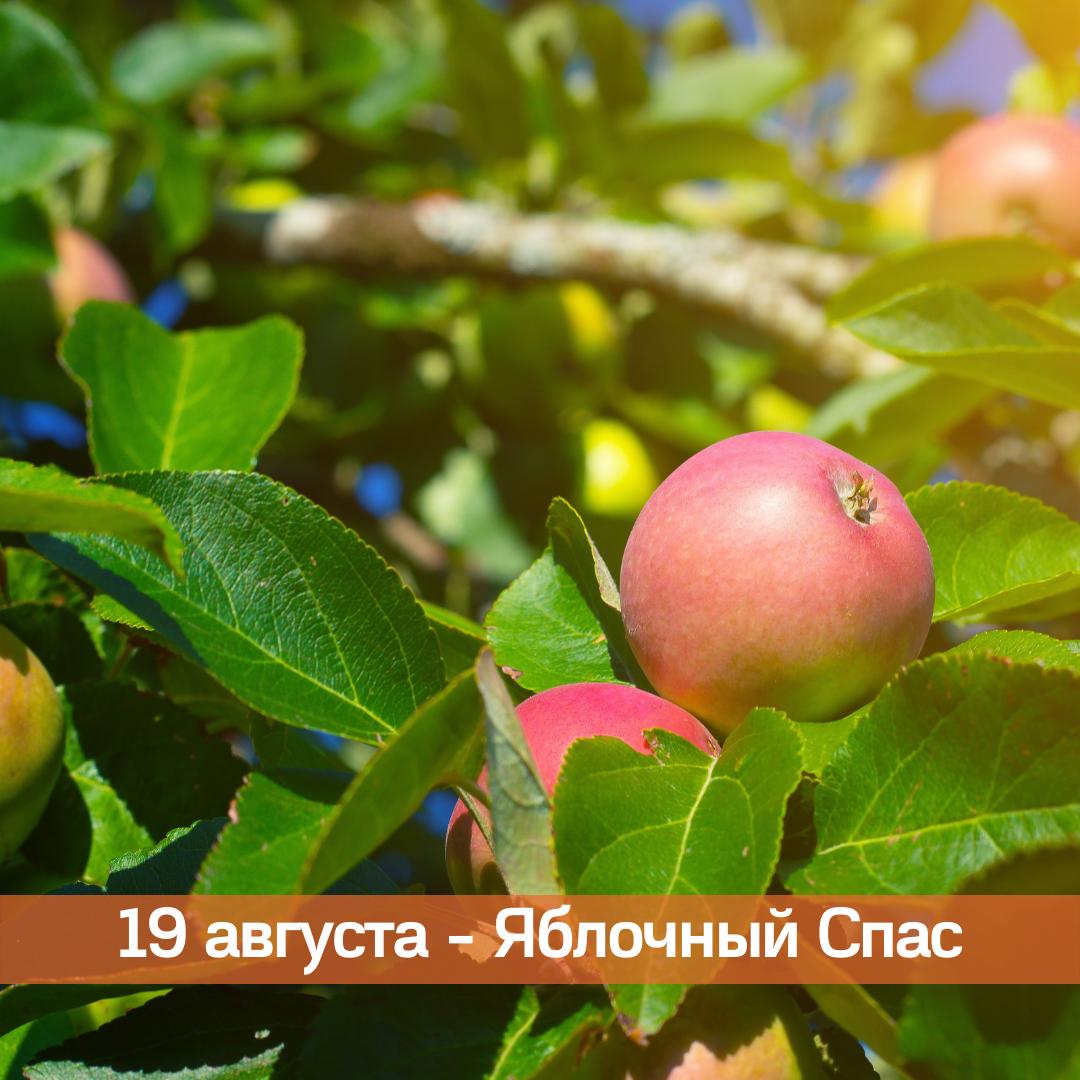 19 августа — Яблочный Спас