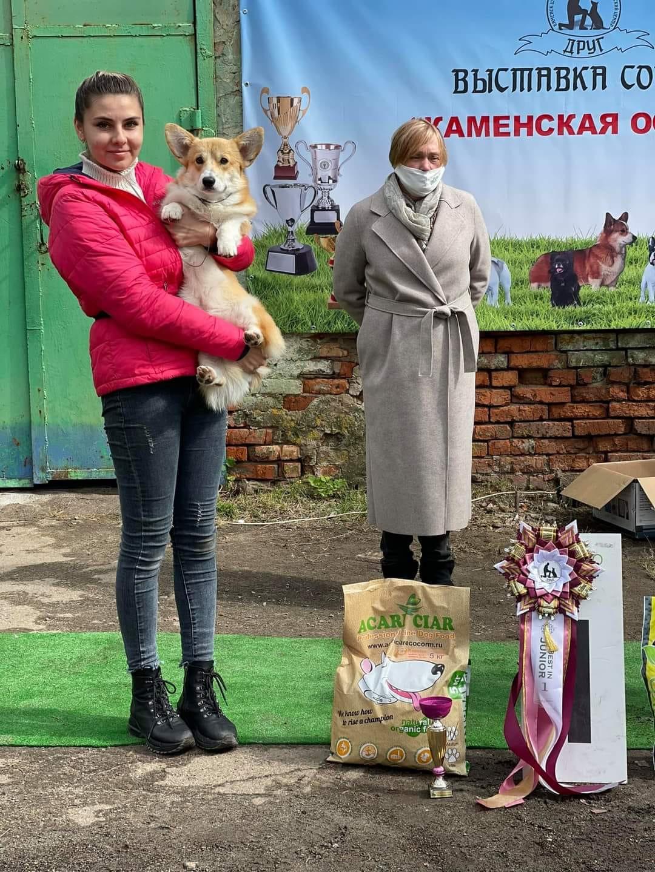 В Каменске прошла выставка собак