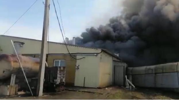 Сотни животных погибли при пожаре на свиноферме в хуторе Гусев
