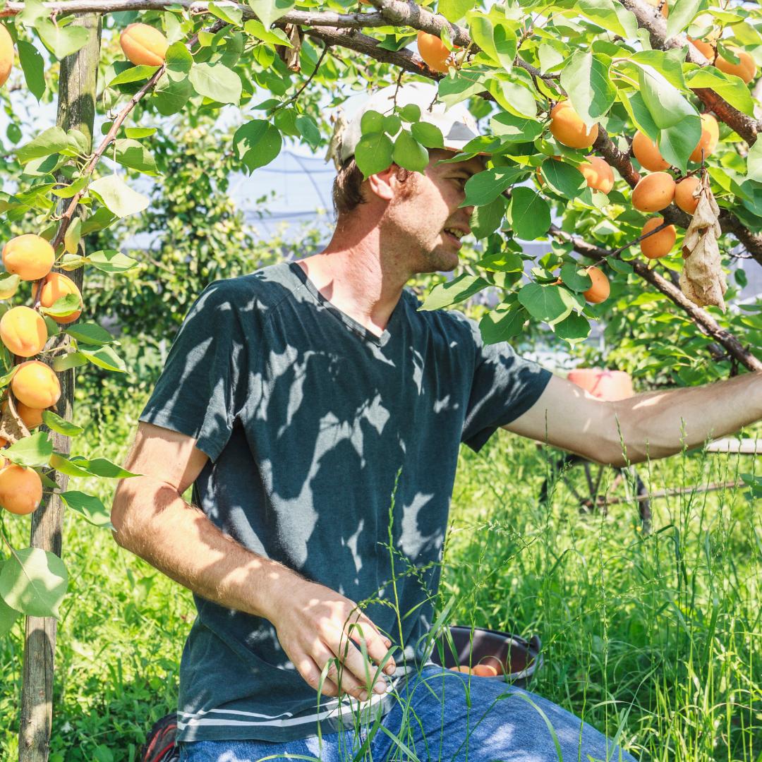 Российские производители фруктов попросили власти ограничить ввоз импорта