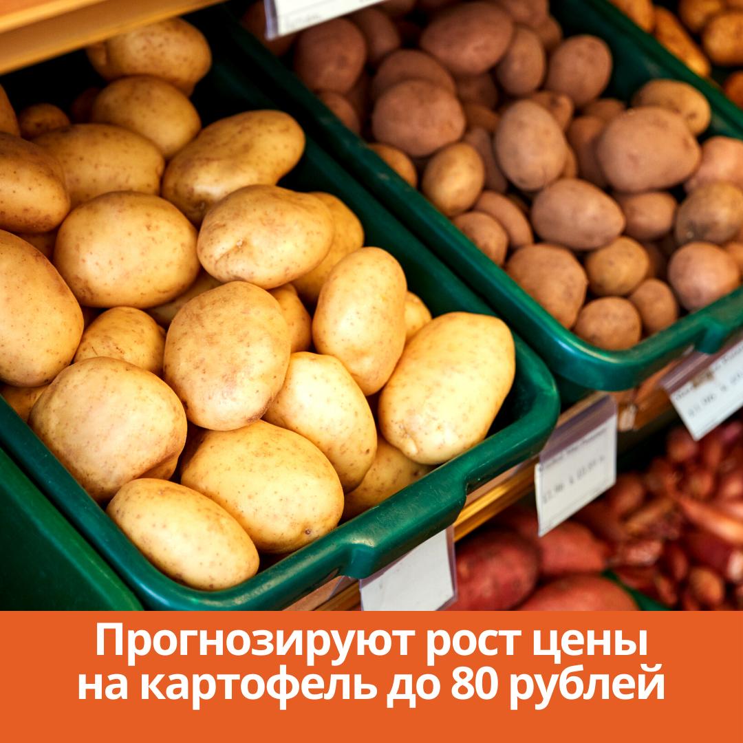 Прогнозируют рост цены на картофель до 80 рублей
